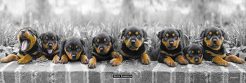 Juliste Keith Kimberlin - puppies