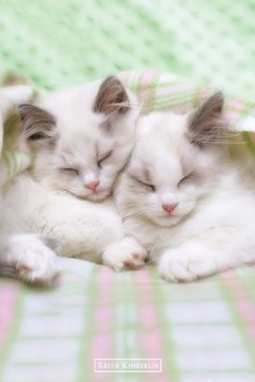 Juliste Keith Kimberlin – sleepy cats