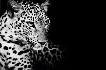 Juliste Leopardi - Kings of Nature