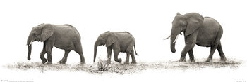 Juliste Mario Moreno - The Elephants
