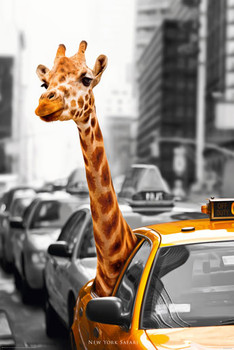 Juliste New York - safari