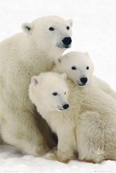 Juliste Polar bear and cubs