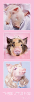 Juliste Rachael Hale – three little pigs