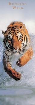 Juliste Running wild - tiger in the water