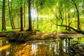Juliste Spring Forrest