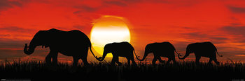 Juliste Sunset Elephants
