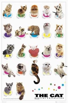 Juliste The cat - compilation