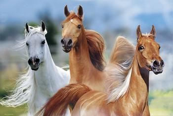 Juliste Three horses - bob langrish
