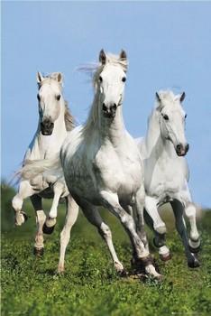 Juliste Three running horses - bob langrish