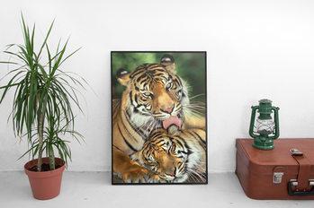 Juliste Tigers - mother's love