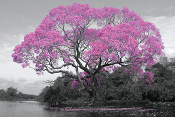 Juliste  Tree - Pink Blossom