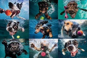 Juliste  Underwater Dogs