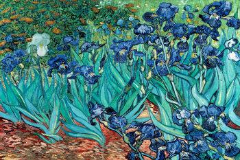 Juliste Vincent van Gogh - Les Irises