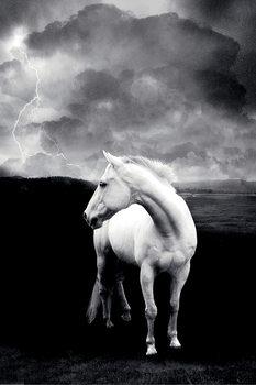 Juliste White horse