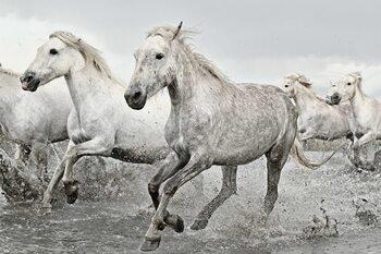 Juliste White Horses