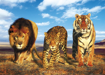 Juliste Wild cats