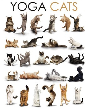 Juliste YOGA CATS - compilation