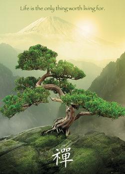 Juliste Zen puu