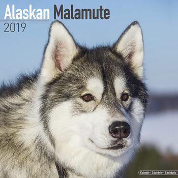 Kalenteri 2019  Alaskan Malamute