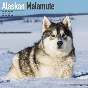 Kalenteri 2020  Alaskan Malamute