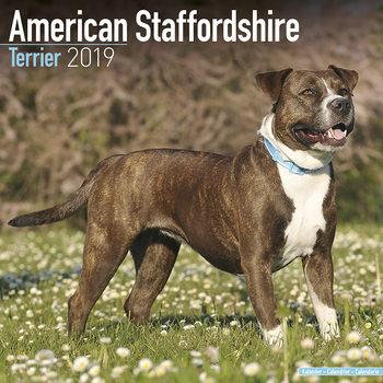 Kalenteri 2019  American Staffordshire Terrier