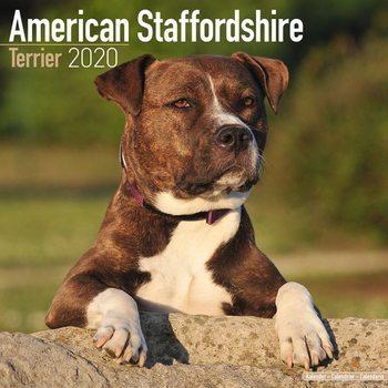 Kalenteri 2020  American Staffordshire Terrier