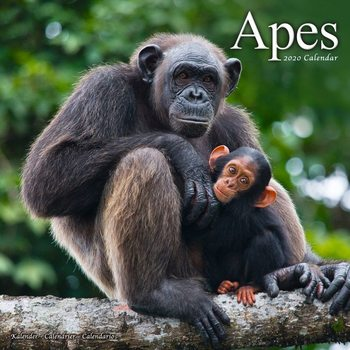 Kalenteri 2020  Apes