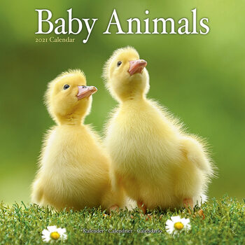 Kalenteri 2021 Baby Animals