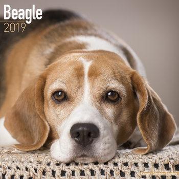 Kalenteri 2019  Beagle