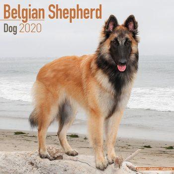 Kalenteri 2020  Belgian Shepherd Dog