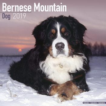 Kalenteri 2019  Bernese Mountain Dog