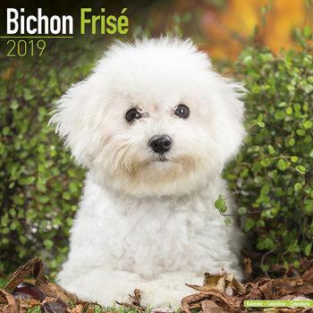 Kalenteri 2019  Bichon Frise