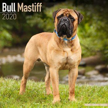 Kalenteri 2020  Bull Mastiff