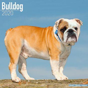 Kalenteri 2020  Bulldog