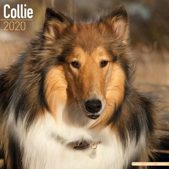 Kalenteri 2020  Collie