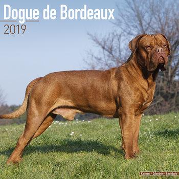 Kalenteri 2019  Dogue de Bordeaux