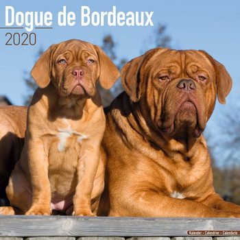 Kalenteri 2020  Dogue de Bordeaux