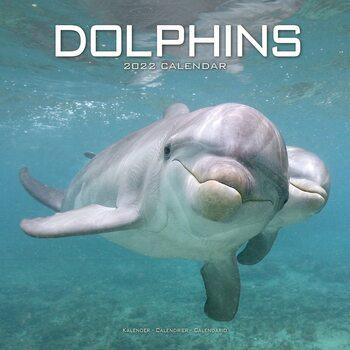 Kalenteri 2022 Dolphins