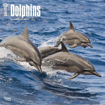 Kalenteri 2017 Dolphins