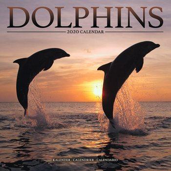 Kalenteri 2020  Dolphins