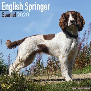 Kalenteri 2020  Eng Springer Spaniel