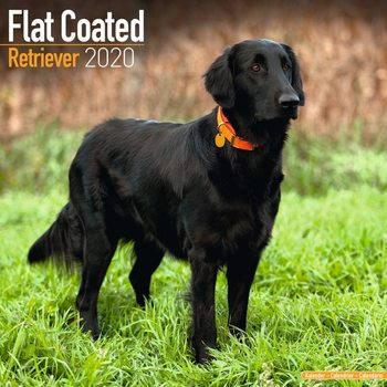Kalenteri 2020  Flatcoated Retriever