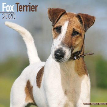 Kalenteri 2020  Fox Terrier