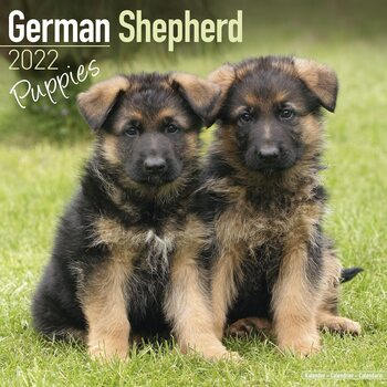 Kalenteri 2022 German Shepherd - Pups