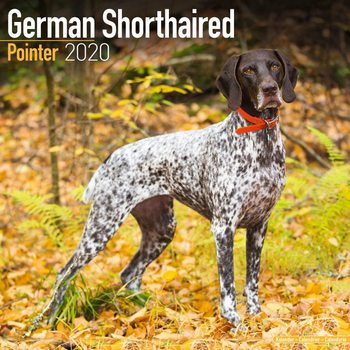 Kalenteri 2020  German ShortHair Pointer