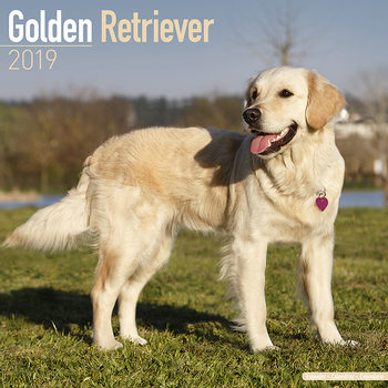 Kalenteri 2019  Golden Retriever