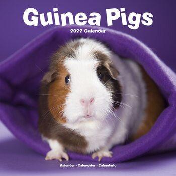 Kalenteri 2022 Guinea Pigs