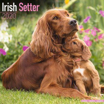 Kalenteri 2020  Irish Setter