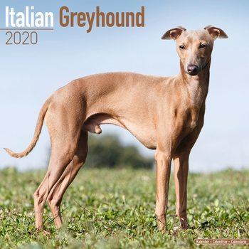 Kalenteri 2020  Italian Greyhound