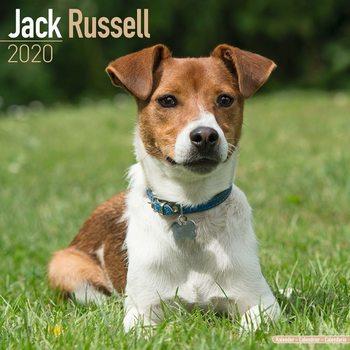 Kalenteri 2020  Jack Russell
